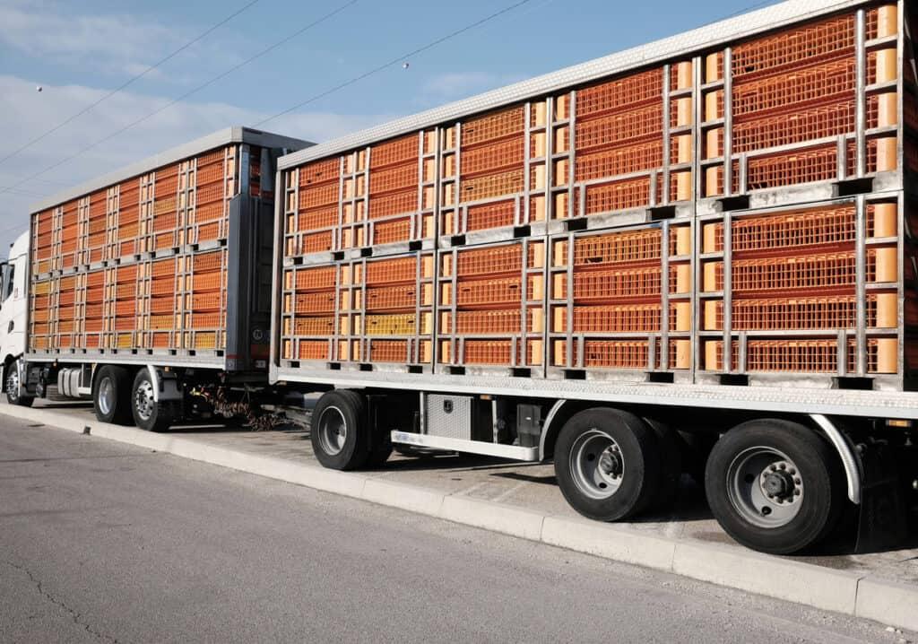 Transporte rodoviário cargas vivas